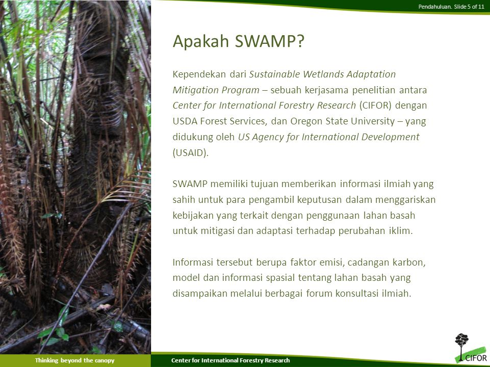 Thinking beyond the canopyCenter for International Forestry Research Apakah SWAMP.