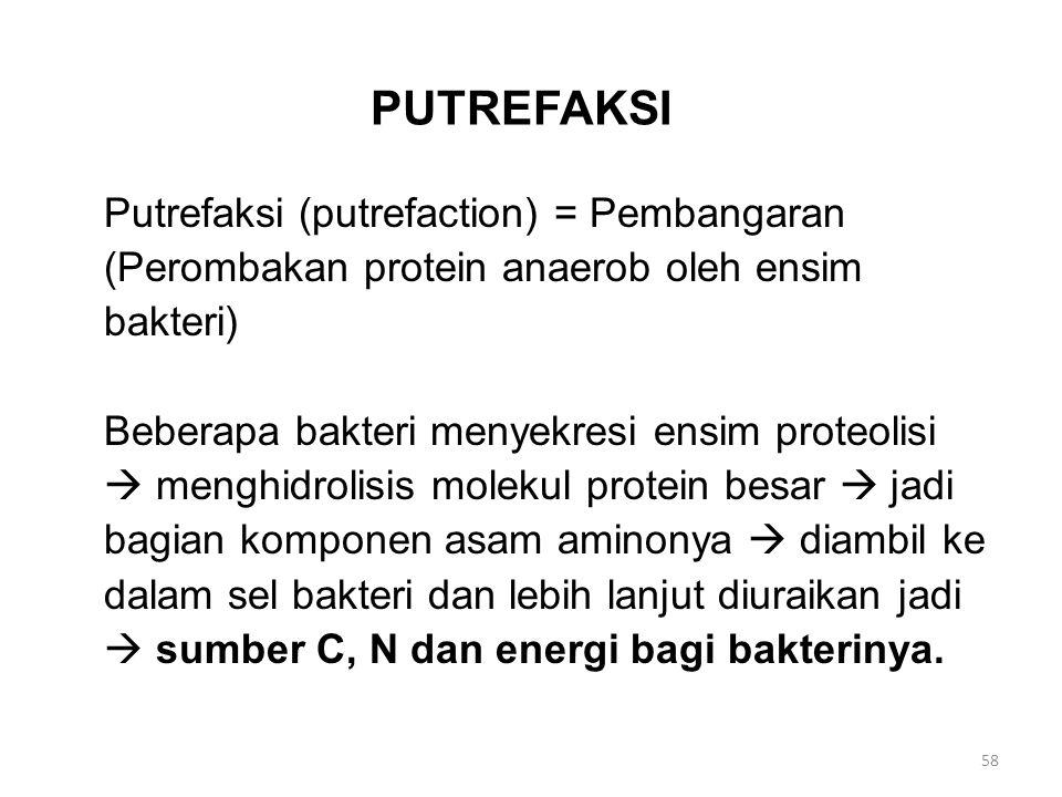 PUTREFAKSI Putrefaksi (putrefaction) = Pembangaran (Perombakan protein anaerob oleh ensim bakteri) Beberapa bakteri menyekresi ensim proteolisi  menghidrolisis molekul protein besar  jadi bagian komponen asam aminonya  diambil ke dalam sel bakteri dan lebih lanjut diuraikan jadi  sumber C, N dan energi bagi bakterinya.