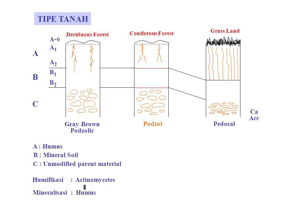 FAKTOR-FAKTOR FISIK SEBAGAI FAKTOR PEMBATAS 1. Temperatur 2. Cahaya (Light) 3. Air 4. Temperatur + Kelembaban 5. Gas atmosfer 6. Biogenic Salt Macronu