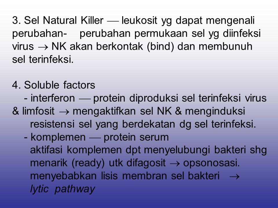 3. Sel Natural Killer  leukosit yg dapat mengenali perubahan- perubahan permukaan sel yg diinfeksi virus  NK akan berkontak (bind) dan membunuh sel