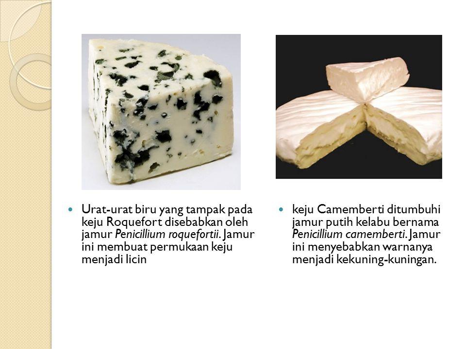Urat-urat biru yang tampak pada keju Roquefort disebabkan oleh jamur Penicillium roquefortii.
