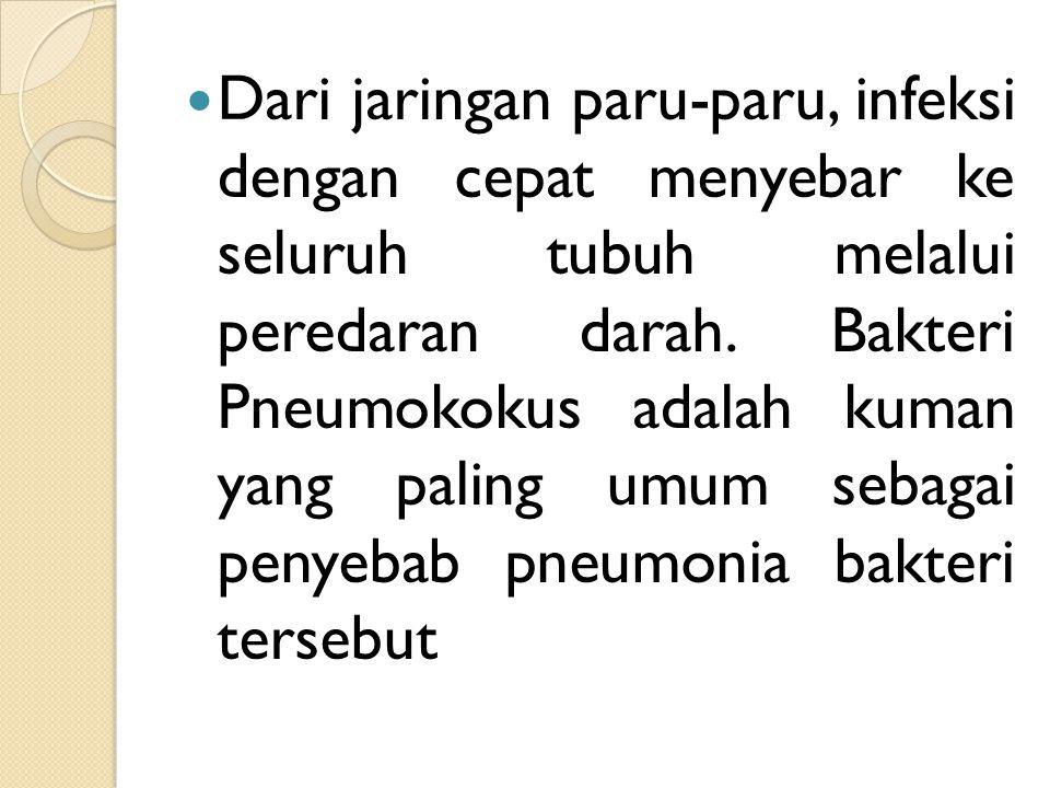 Dari jaringan paru-paru, infeksi dengan cepat menyebar ke seluruh tubuh melalui peredaran darah. Bakteri Pneumokokus adalah kuman yang paling umum seb