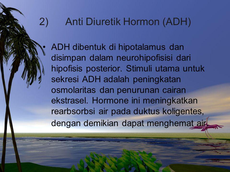 2) Anti Diuretik Hormon (ADH) ADH dibentuk di hipotalamus dan disimpan dalam neurohipofisisi dari hipofisis posterior. Stimuli utama untuk sekresi ADH