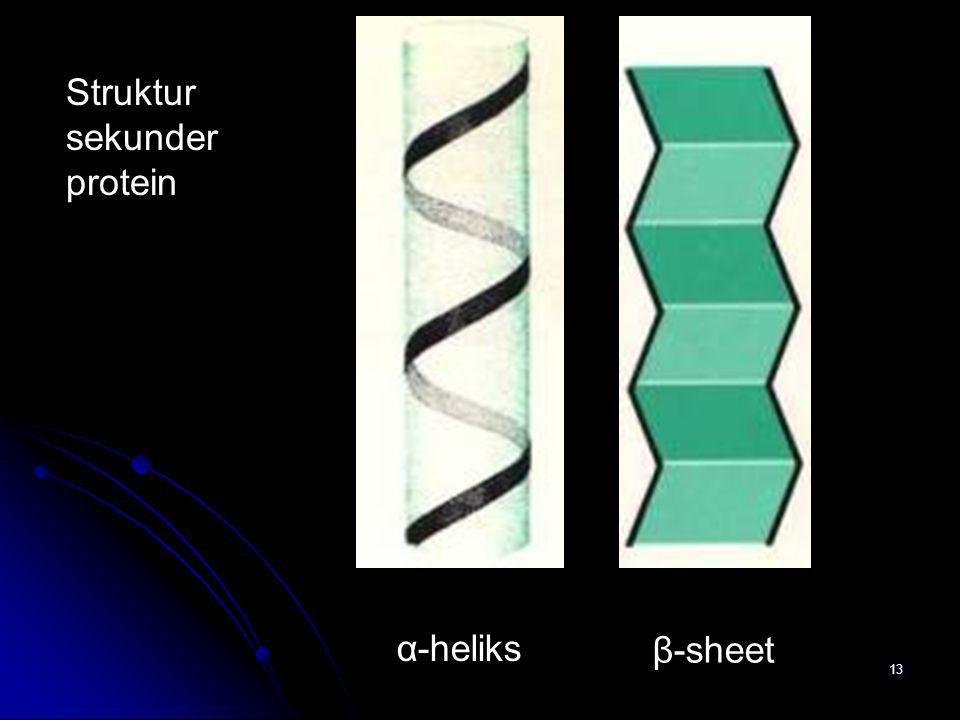 13 α-heliks β-sheet Struktur sekunder protein
