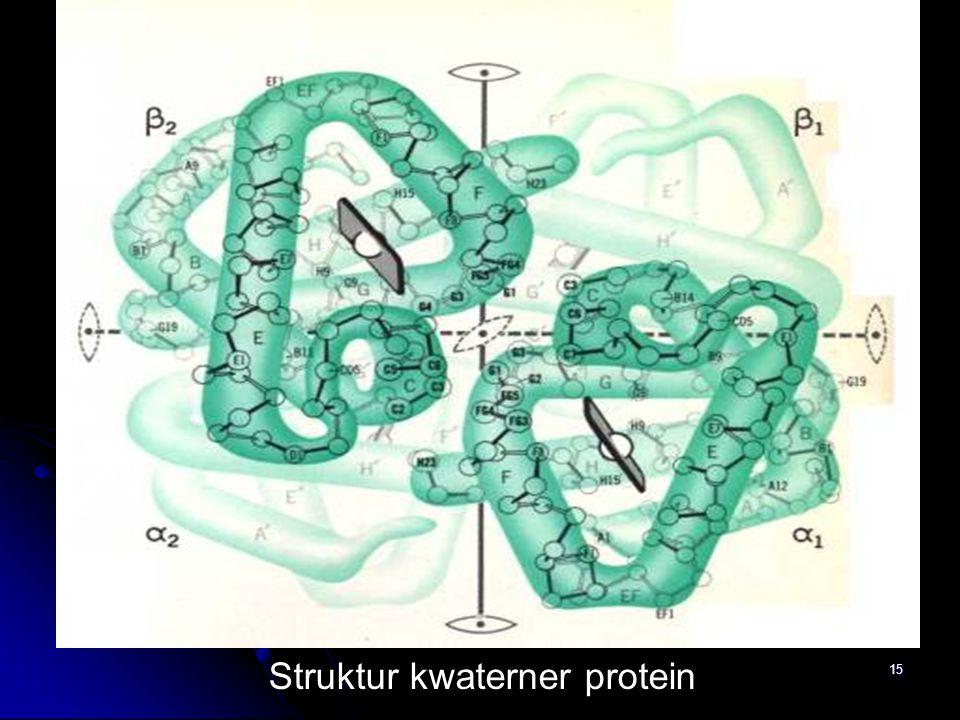 15 Struktur kwaterner protein