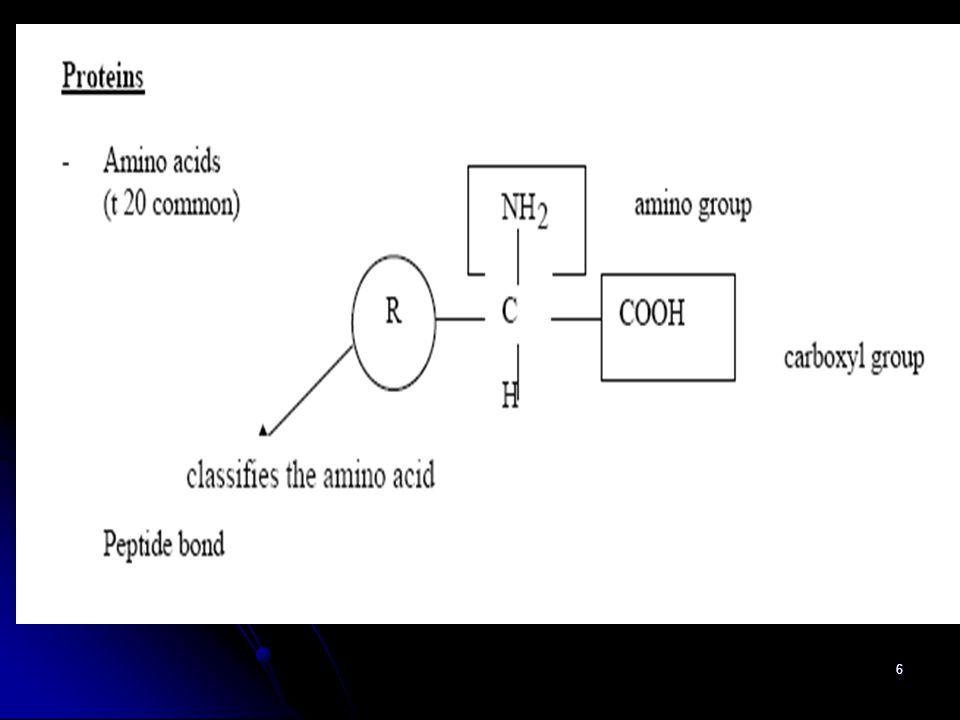 7 C O_O_ O CH H3+NH3+N H Glisin CH 3 Alanin C O_O_ O CH H3+NH3+N dst