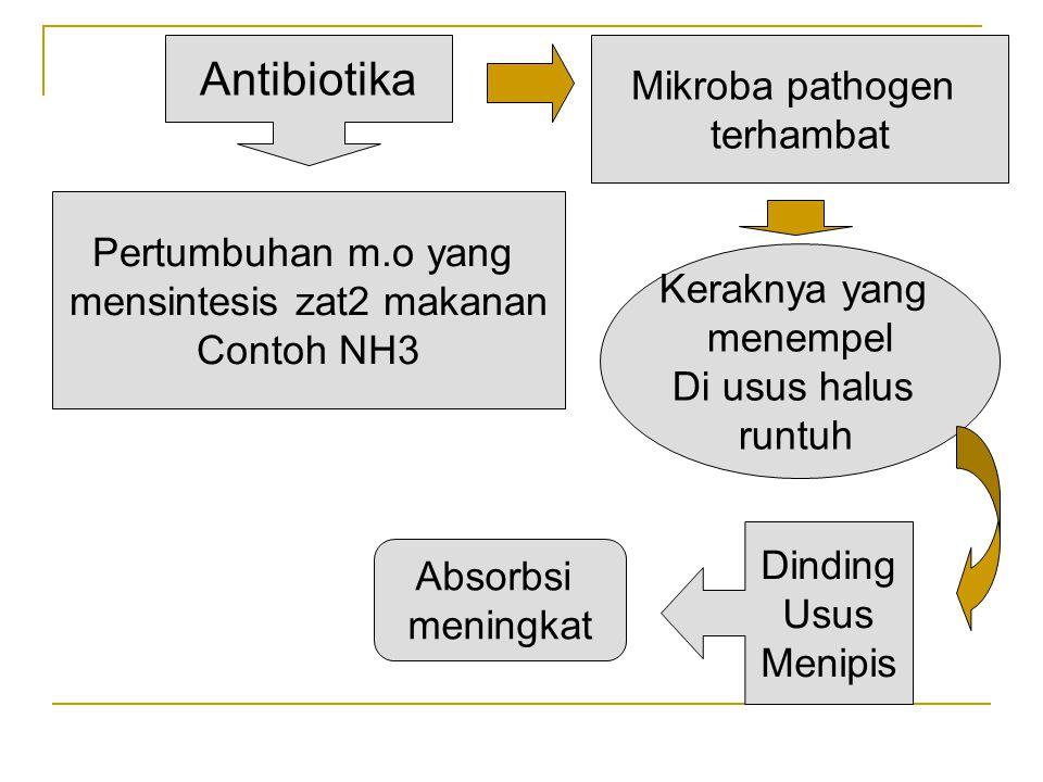Antibiotika Pertumbuhan m.o yang mensintesis zat2 makanan Contoh NH3 Mikroba pathogen terhambat Keraknya yang menempel Di usus halus runtuh Dinding Us