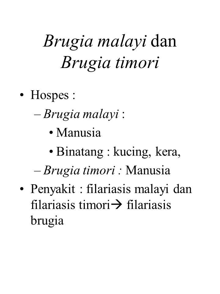 Brugia malayi dan Brugia timori Hospes : –Brugia malayi : Manusia Binatang : kucing, kera, –Brugia timori : Manusia Penyakit : filariasis malayi dan filariasis timori  filariasis brugia