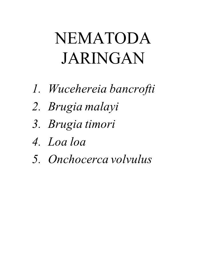 NEMATODA JARINGAN 1.Wucehereia bancrofti 2.Brugia malayi 3.Brugia timori 4.Loa loa 5.Onchocerca volvulus