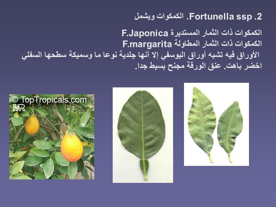 2. Fortunella ssp. الكمكوات ويشمل الكمكوات ذات الثمار المستديرة F.Japonica الكمكوات ذات الثمار المطاولة F.margarita الأوراق فيه تشبه أوراق اليوسفي إلا