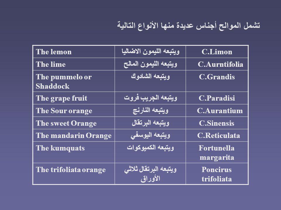 C.Limonويتبعه الليمون الاضالياThe lemon C.Aurntifoliaويتبعه الليمون المالحThe lime C.Grandisويتبعه الشادوكThe pummelo or Shaddock C.Paradisiويتبعه الج