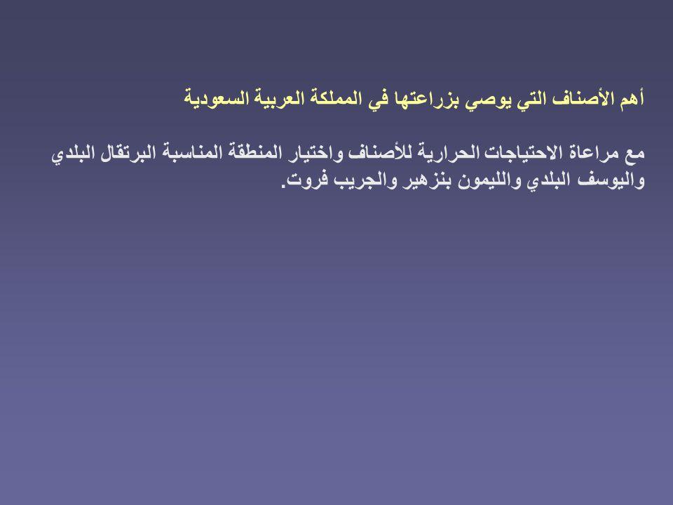 أهم الأصناف التي يوصي بزراعتها في المملكة العربية السعودية مع مراعاة الاحتياجات الحرارية للأصناف واختيار المنطقة المناسبة البرتقال البلدي واليوسف البل