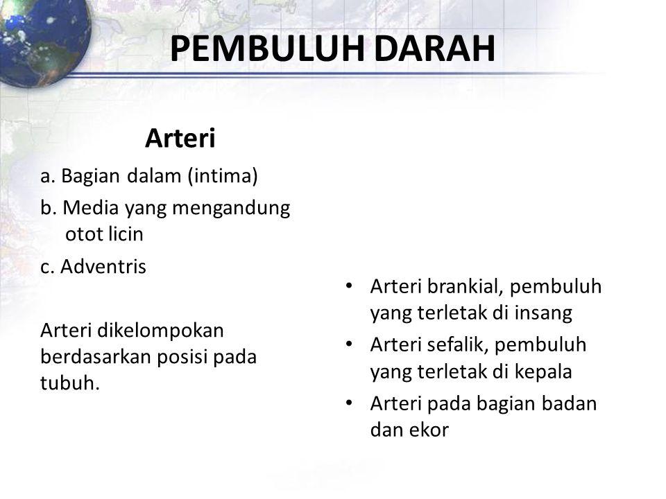 PEMBULUH DARAH Arteri a. Bagian dalam (intima) b. Media yang mengandung otot licin c. Adventris Arteri dikelompokan berdasarkan posisi pada tubuh. Art