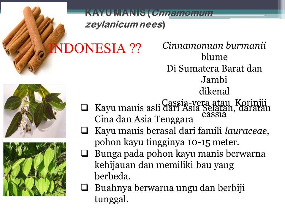KAYU MANIS (Cnnamomum zeylanicum nees)  Kayu manis asli dari Asia Selatan, daratan Cina dan Asia Tenggara  Kayu manis berasal dari famili lauraceae,