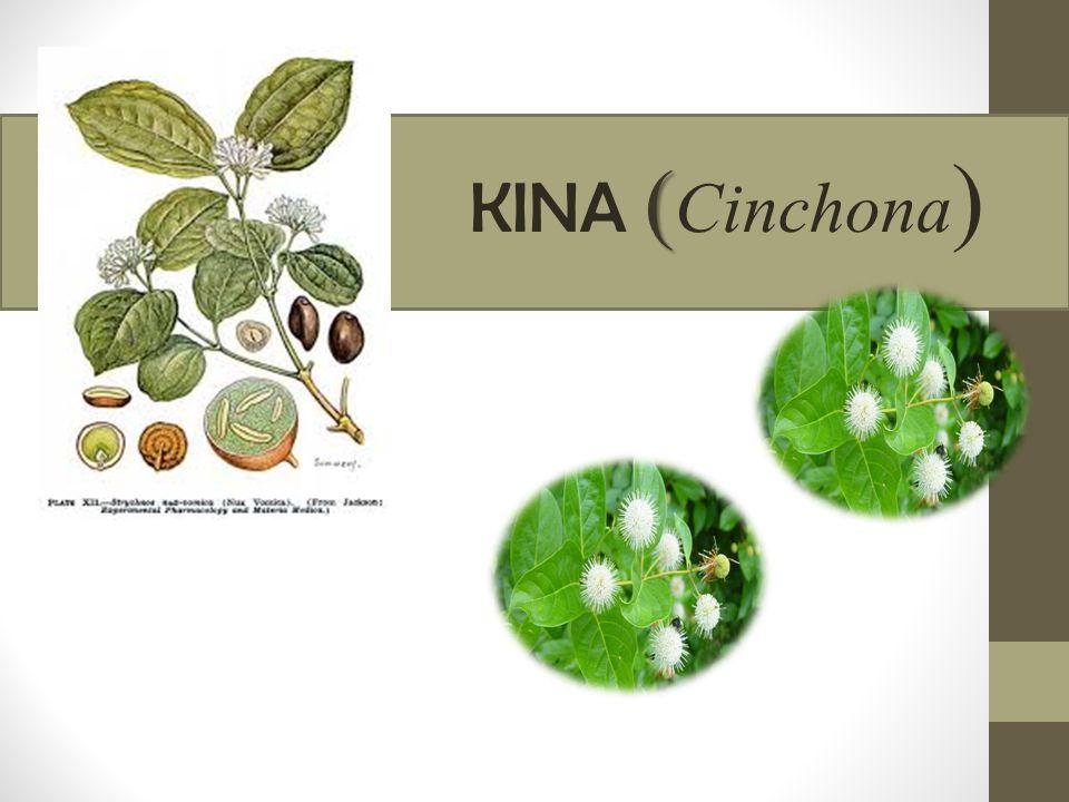 ( KINA ( Cinchona )