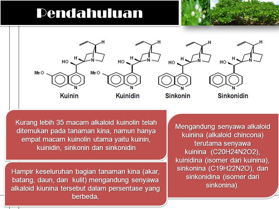 PendahuluanPendahuluan Mengandung senyawa alkaloid kuinina (alkaloid chincona) terutama senyawa kuinina (C20H24N2O2), kuinidina (isomer dari kuinina),