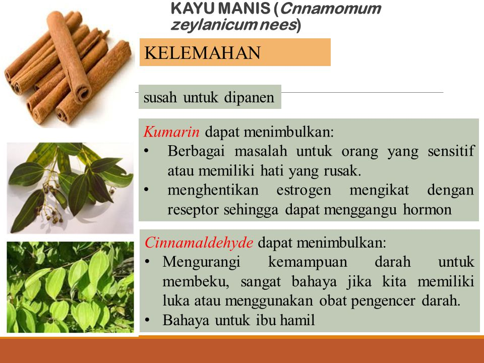 KAYU MANIS (Cnnamomum zeylanicum nees) susah untuk dipanen Kumarin dapat menimbulkan: Berbagai masalah untuk orang yang sensitif atau memiliki hati ya