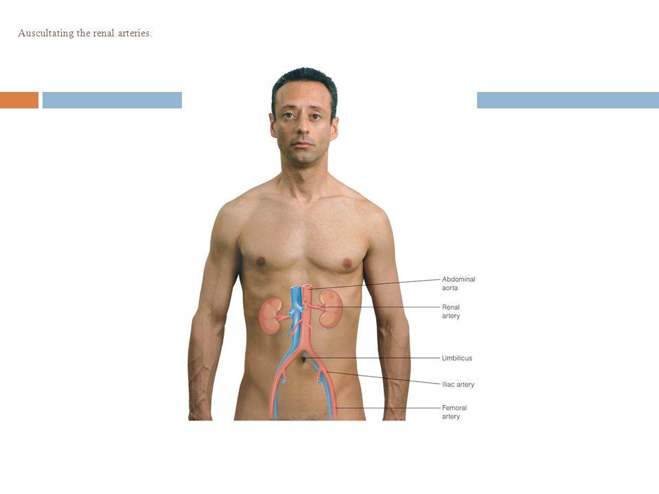 Auscultating the renal arteries.
