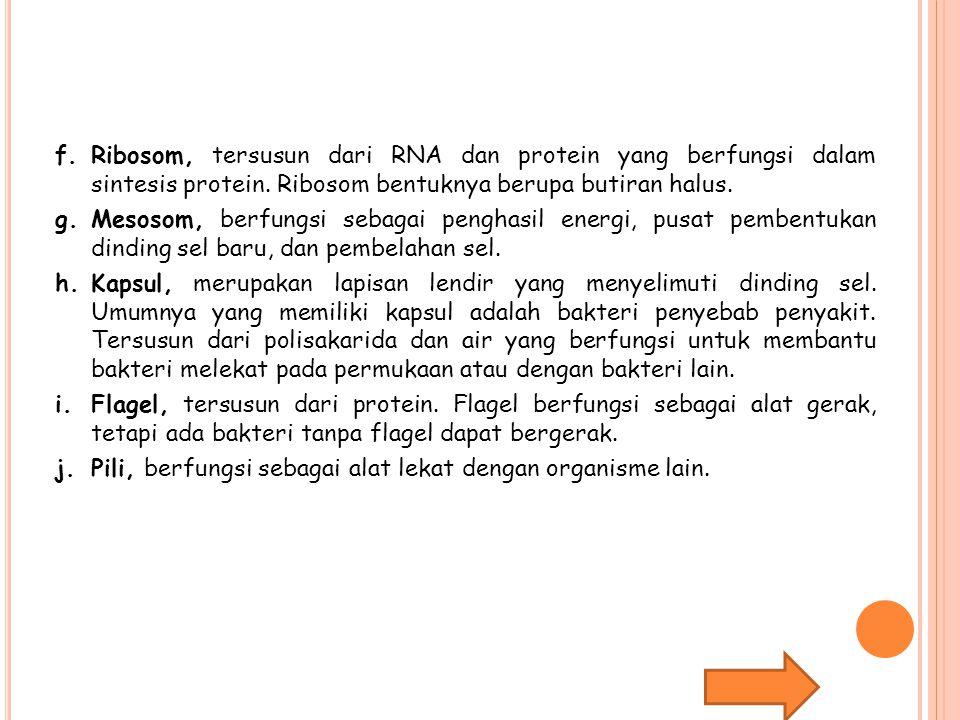 f.Ribosom, tersusun dari RNA dan protein yang berfungsi dalam sintesis protein.
