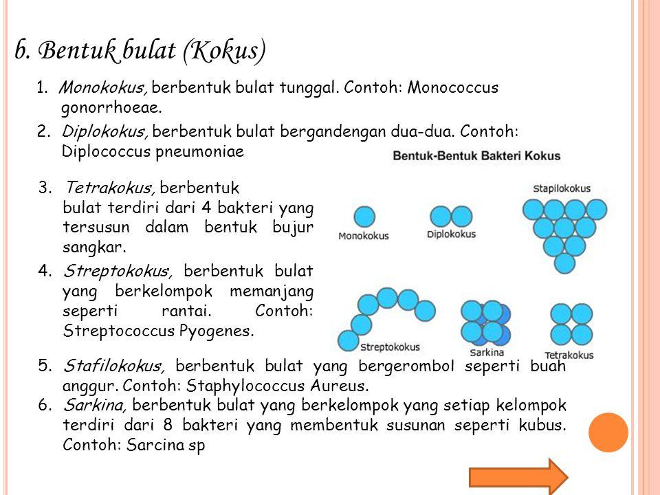b.Bentuk bulat (Kokus) 1. Monokokus, berbentuk bulat tunggal. Contoh: Monococcus gonorrhoeae. 2. Diplokokus, berbentuk bulat bergandengan dua-dua. Con