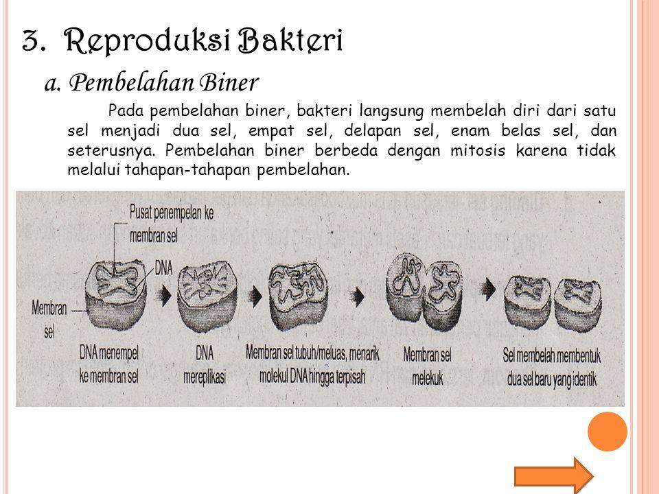3. Reproduksi Bakteri a.Pembelahan Biner Pada pembelahan biner, bakteri langsung membelah diri dari satu sel menjadi dua sel, empat sel, delapan sel,
