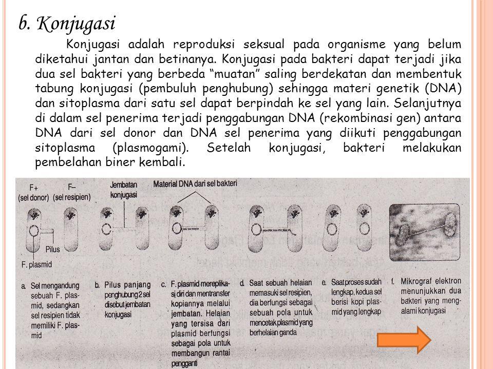 b.Konjugasi Konjugasi adalah reproduksi seksual pada organisme yang belum diketahui jantan dan betinanya. Konjugasi pada bakteri dapat terjadi jika du