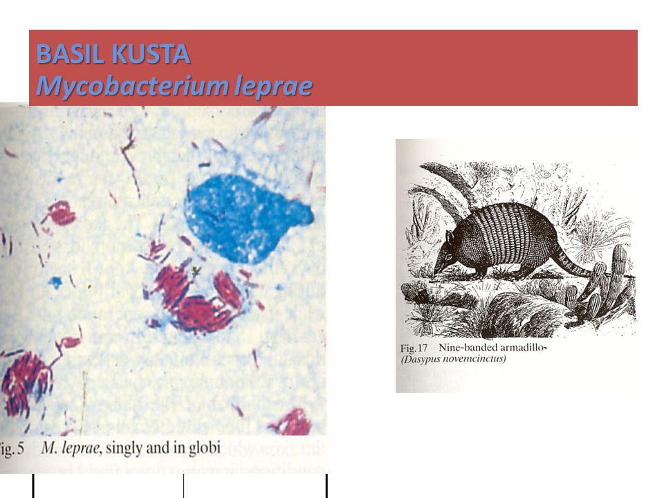 BASIL KUSTA Mycobacterium leprae