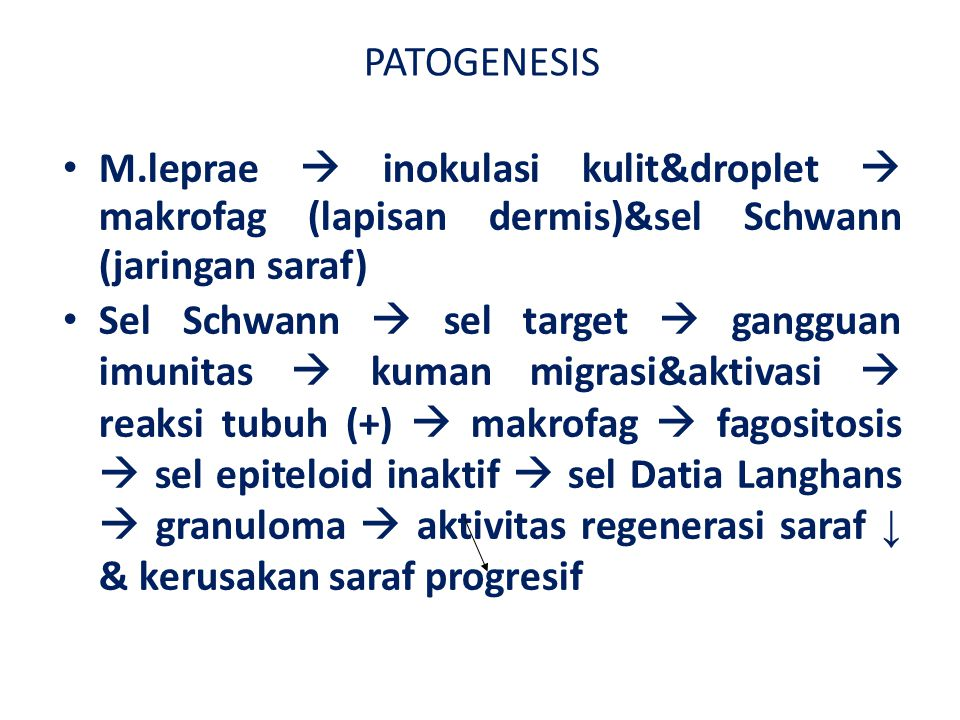 Imuno-Patogenesis M.