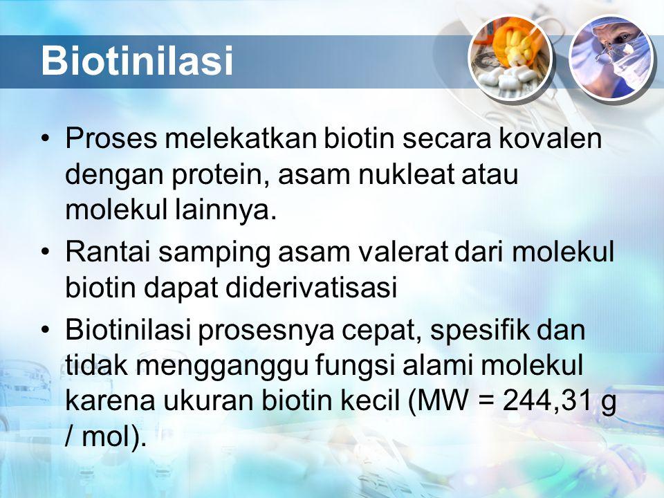 Biotinilasi Proses melekatkan biotin secara kovalen dengan protein, asam nukleat atau molekul lainnya. Rantai samping asam valerat dari molekul biotin
