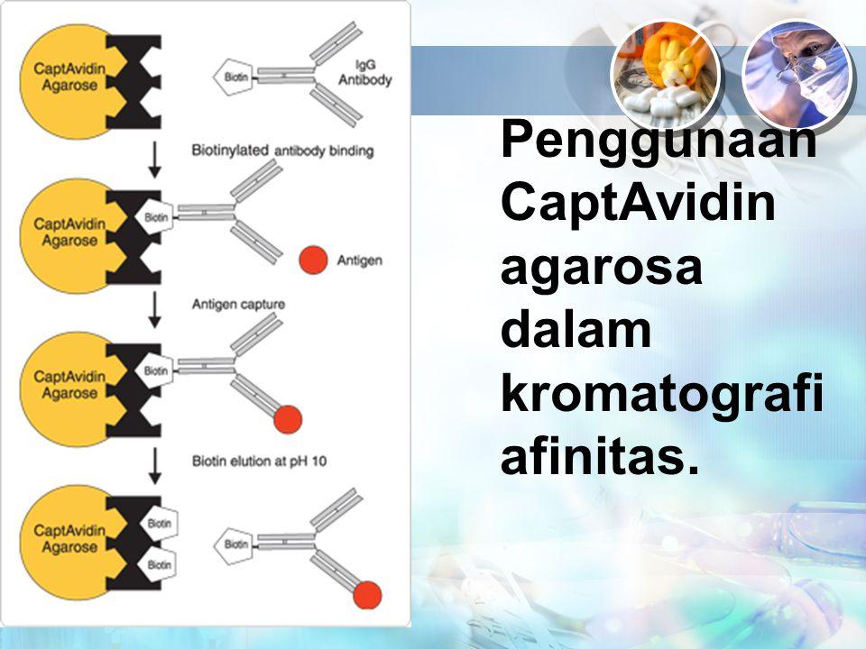 Penggunaan CaptAvidin agarosa dalam kromatografi afinitas.
