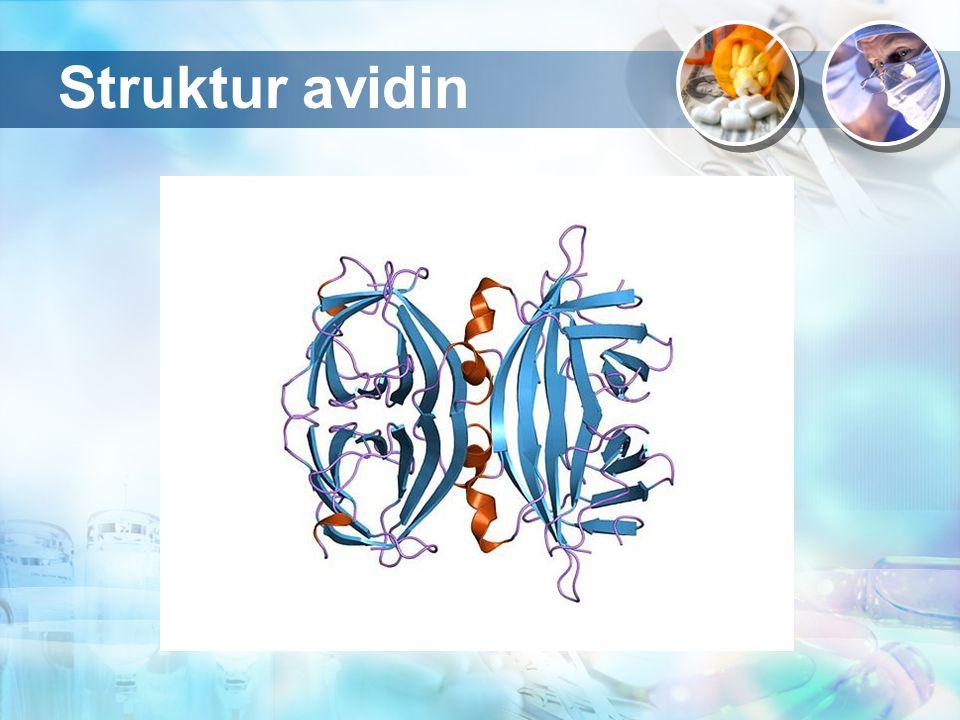 Karakteristik fisikokimia avidin Ada dua jenis asam amino yang berperan dalam interaksi avidin-biotin yaitu triptofan dan lisin.
