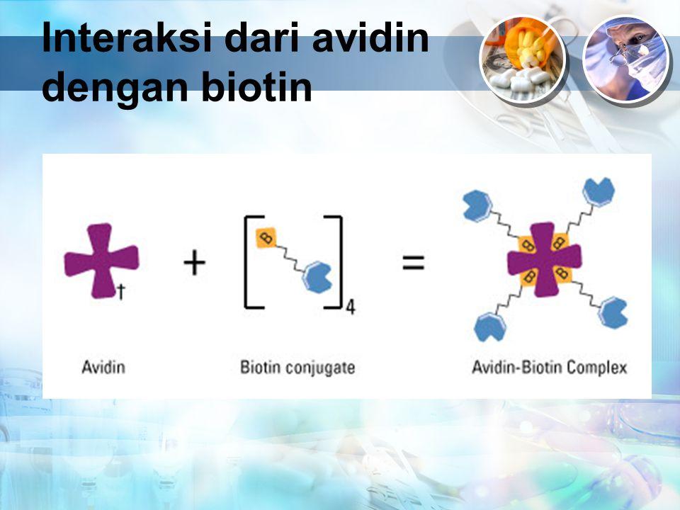 Interaksi dari avidin dengan biotin