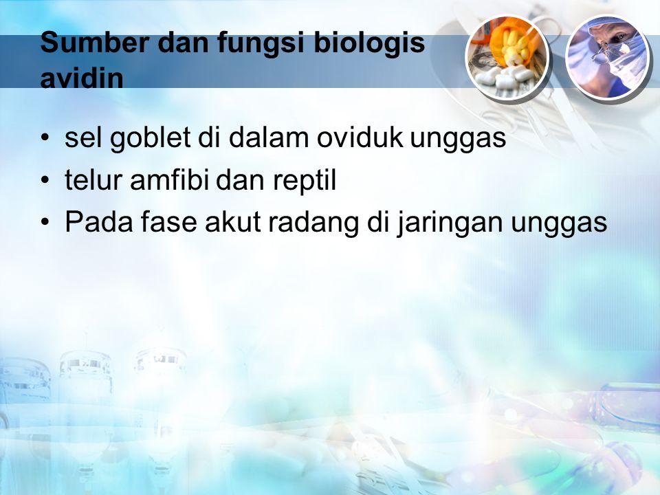 Sumber dan fungsi biologis avidin sel goblet di dalam oviduk unggas telur amfibi dan reptil Pada fase akut radang di jaringan unggas