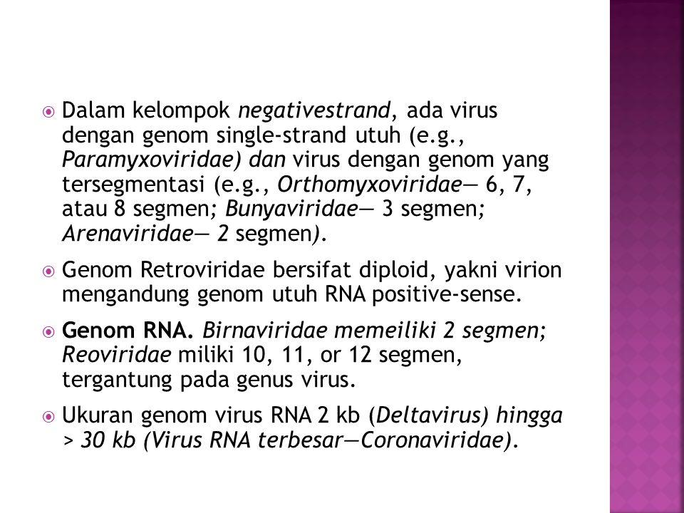  Dalam kelompok negativestrand, ada virus dengan genom single-strand utuh (e.g., Paramyxoviridae) dan virus dengan genom yang tersegmentasi (e.g., Orthomyxoviridae— 6, 7, atau 8 segmen; Bunyaviridae— 3 segmen; Arenaviridae— 2 segmen).