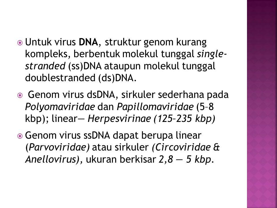  Untuk virus DNA, struktur genom kurang kompleks, berbentuk molekul tunggal single- stranded (ss)DNA ataupun molekul tunggal doublestranded (ds)DNA.