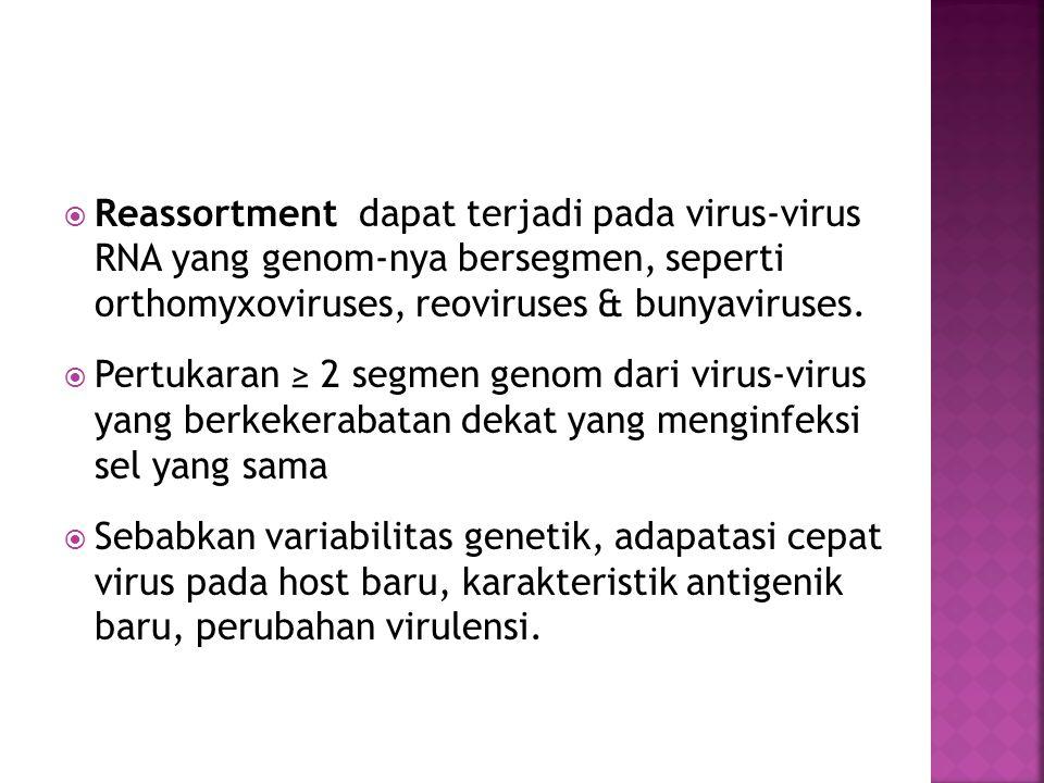  Reassortment dapat terjadi pada virus-virus RNA yang genom-nya bersegmen, seperti orthomyxoviruses, reoviruses & bunyaviruses.  Pertukaran ≥ 2 segm