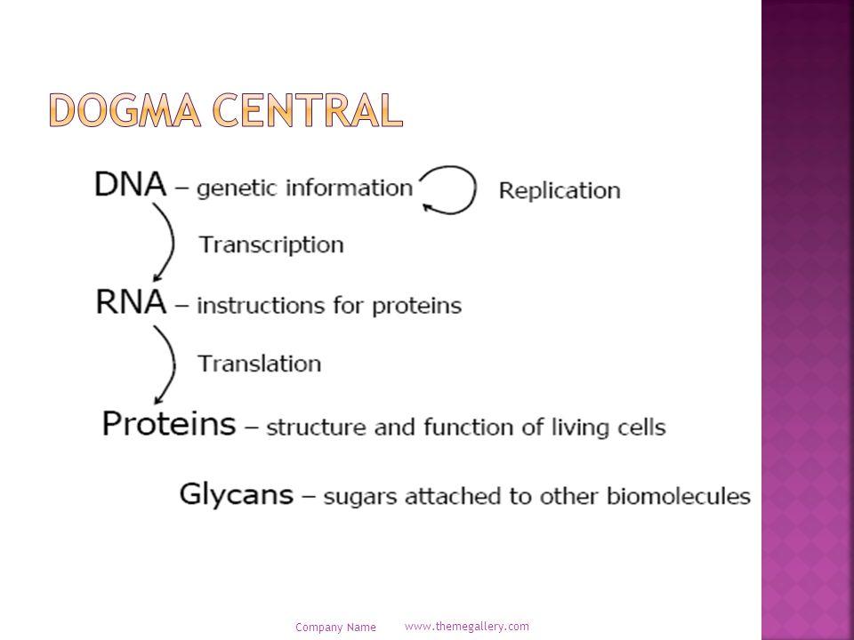  Ukuran genom mencerminkan kapasitas penyandian protein dari virus.