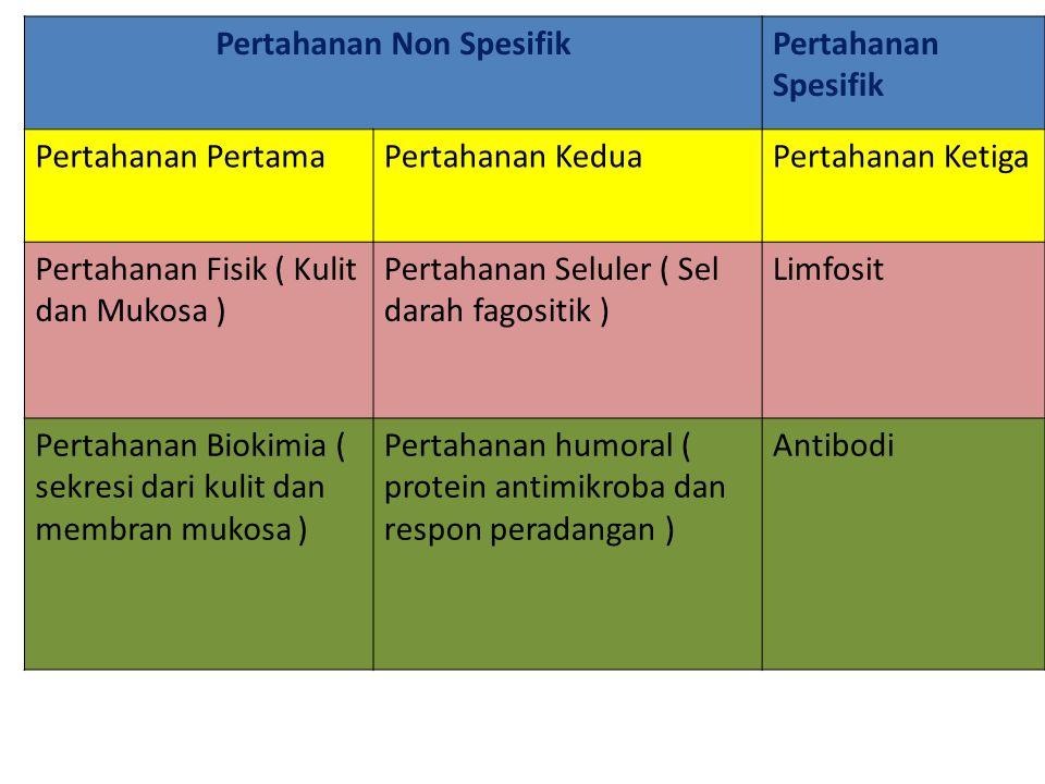 Pertahanan Non SpesifikPertahanan Spesifik Pertahanan PertamaPertahanan KeduaPertahanan Ketiga Pertahanan Fisik ( Kulit dan Mukosa ) Pertahanan Selule