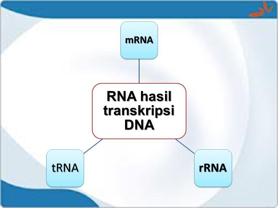 RNA hasil transkripsi DNA mRNA rRNAtRNA