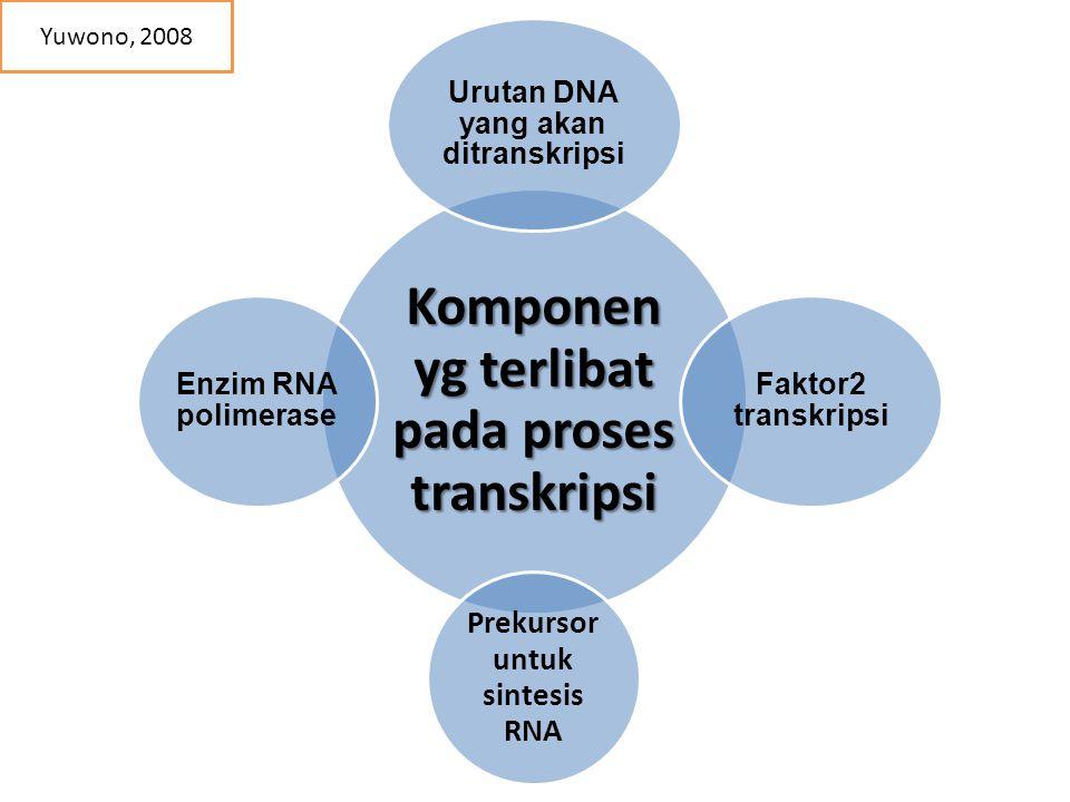 Komponen yg terlibat pada proses transkripsi Urutan DNA yang akan ditranskripsi Faktor2 transkripsi Prekursor untuk sintesis RNA Enzim RNA polimerase Yuwono, 2008