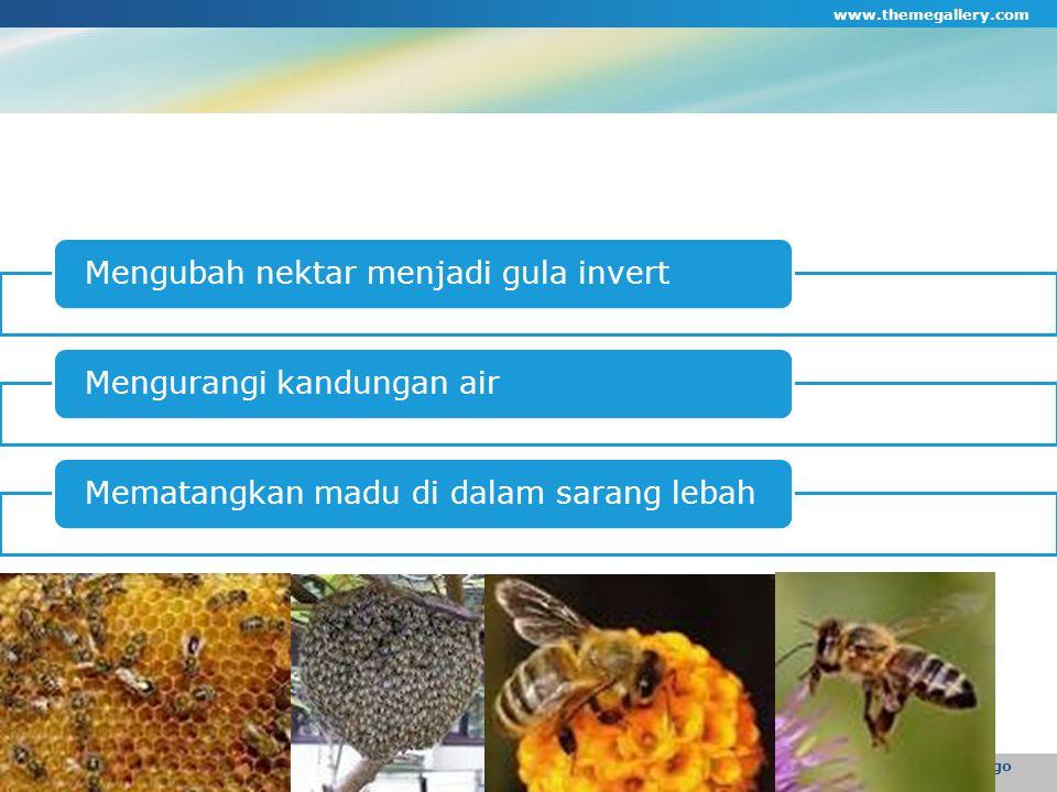 Mengubah nektar menjadi gula invertMengurangi kandungan airMematangkan madu di dalam sarang lebah www.themegallery.com Company Logo
