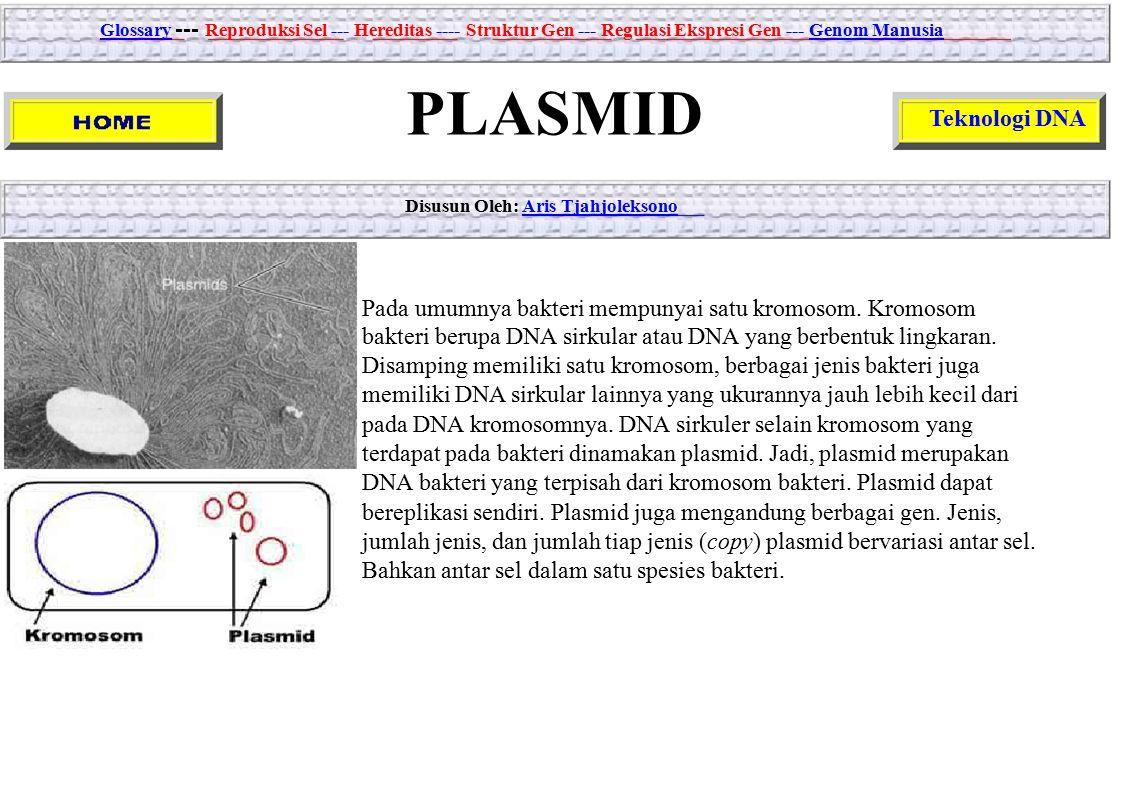 GlossaryGlossary --- Reproduksi Sel --- Hereditas ---- Struktur Gen --- Regulasi Ekspresi Gen --- Genom ManusiaGenom Manusia PLASMID Teknologi DNA Dis