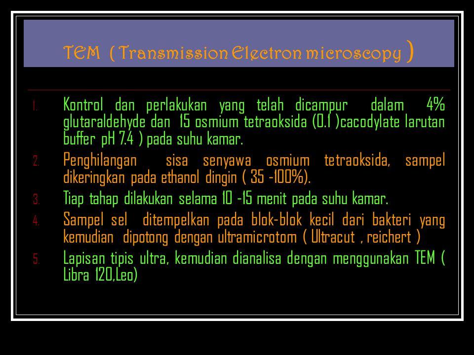 TEM ( Transmission Electron microscopy ) 1. Kontrol dan perlakukan yang telah dicampur dalam 4% glutaraldehyde dan 15 osmium tetraoksida (0.1 )cacodyl
