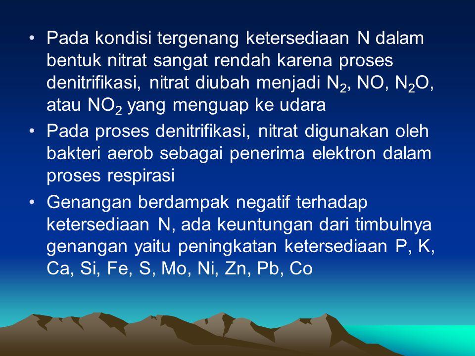 Pada kondisi tergenang ketersediaan N dalam bentuk nitrat sangat rendah karena proses denitrifikasi, nitrat diubah menjadi N 2, NO, N 2 O, atau NO 2 yang menguap ke udara Pada proses denitrifikasi, nitrat digunakan oleh bakteri aerob sebagai penerima elektron dalam proses respirasi Genangan berdampak negatif terhadap ketersediaan N, ada keuntungan dari timbulnya genangan yaitu peningkatan ketersediaan P, K, Ca, Si, Fe, S, Mo, Ni, Zn, Pb, Co
