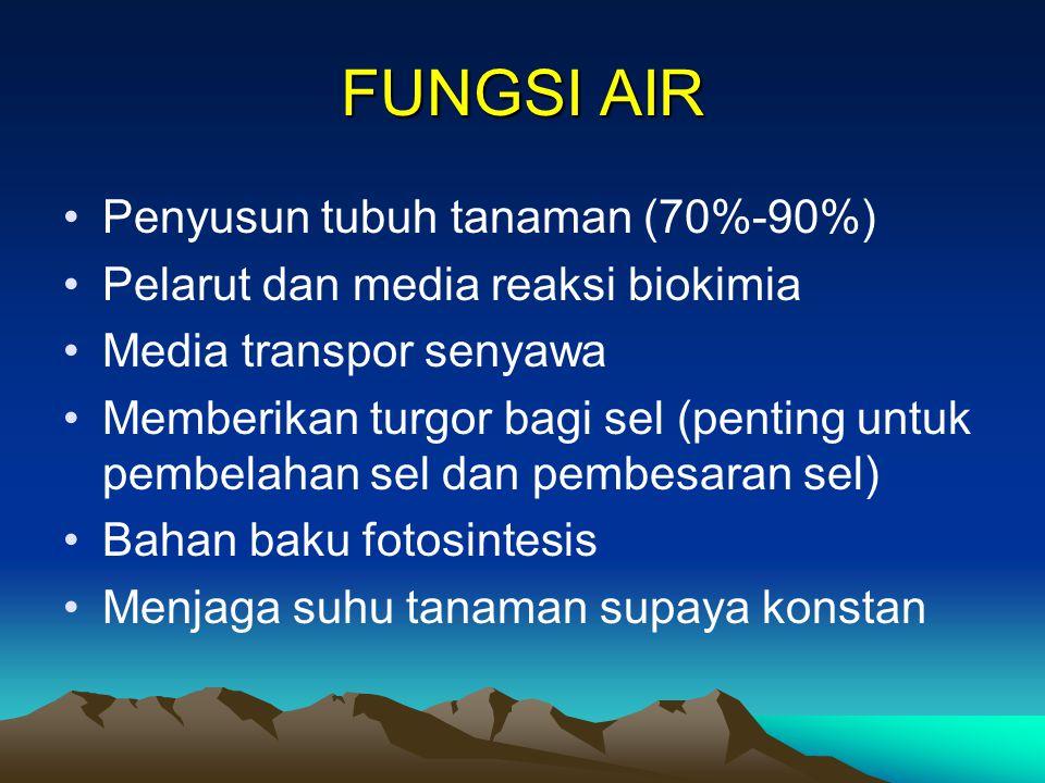 FUNGSI AIR Penyusun tubuh tanaman (70%-90%) Pelarut dan media reaksi biokimia Media transpor senyawa Memberikan turgor bagi sel (penting untuk pembelahan sel dan pembesaran sel) Bahan baku fotosintesis Menjaga suhu tanaman supaya konstan