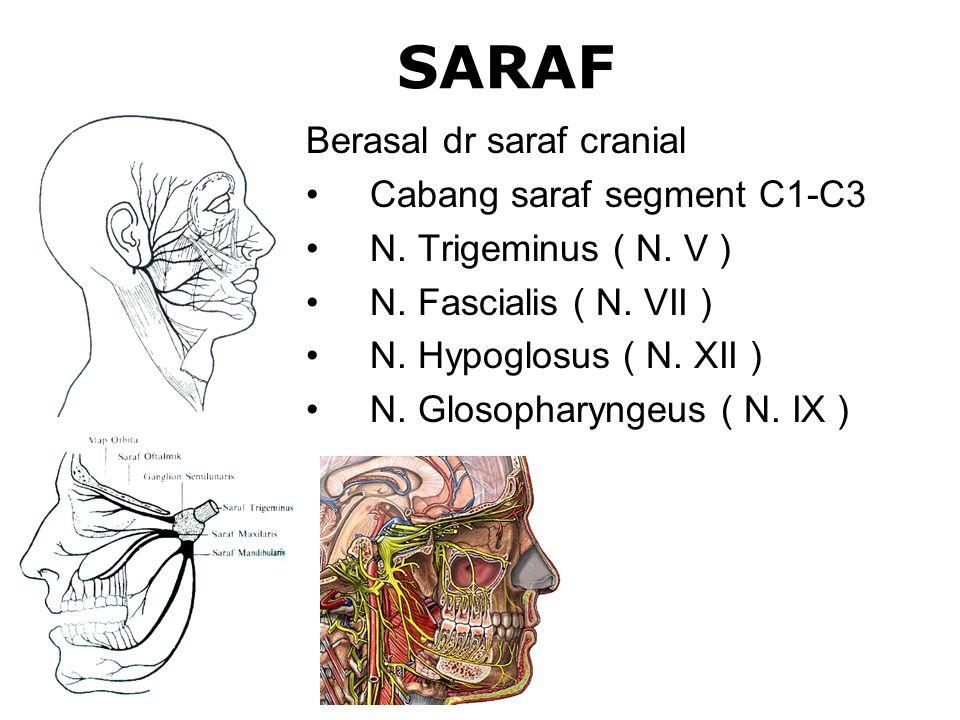 SARAF Berasal dr saraf cranial Cabang saraf segment C1-C3 N. Trigeminus ( N. V ) N. Fascialis ( N. VII ) N. Hypoglosus ( N. XII ) N. Glosopharyngeus (