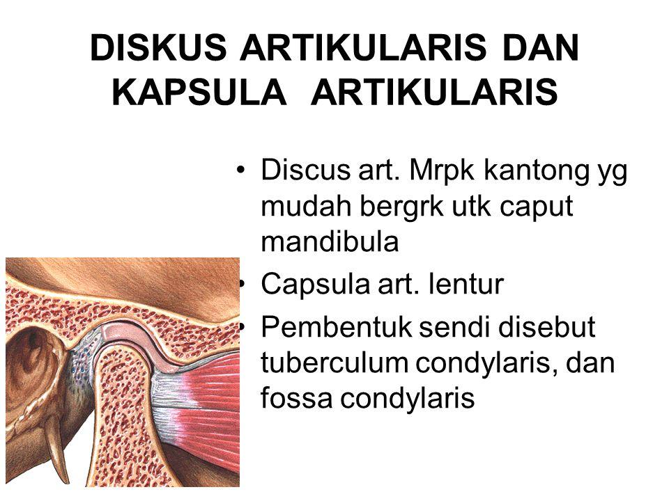 LIGAMENTS 1.Lig.capsular: sekeliling fossa mandibula-tuberculum articularis 2.