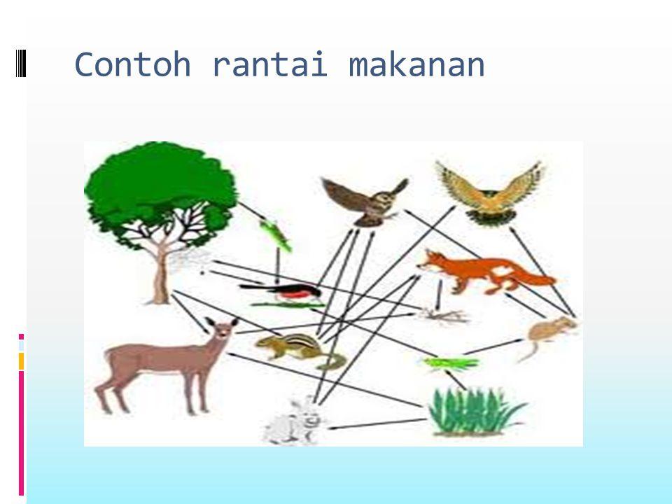 Rantai makanan  Ada dua tipe dasar rantai makanan:  1.rantai makanan rerumputan(grazing food chain).misalnya:tumbuhan-herbivora-carnivora- omnivora.