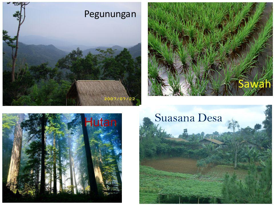 Pegunungan Sawah Hutan Suasana Desa