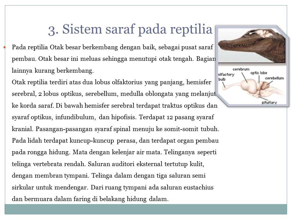 3. Sistem saraf pada reptilia Pada reptilia Otak besar berkembang dengan baik, sebagai pusat saraf pembau. Otak besar ini meluas sehingga menutupi ota